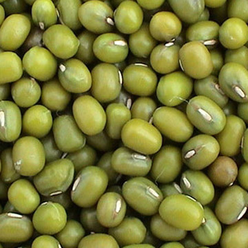 the properties of mung bean mung bean kacang hijau